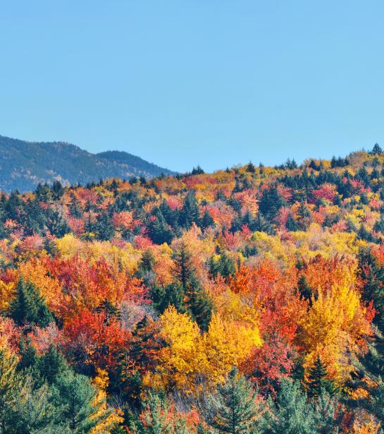 Naaldbomen bos van bovenaf in tientallen kleuren